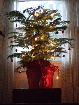 Christmas trees . . .-dscf4469-1-.jpg
