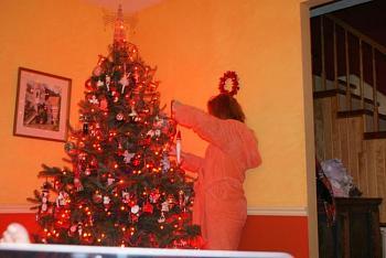 Christmas trees . . .-dsc01068.jpg