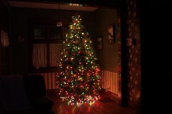 Christmas trees . . .-img_0021.jpg