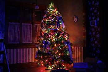 Christmas trees . . .-2010_01_02_0104.jpg