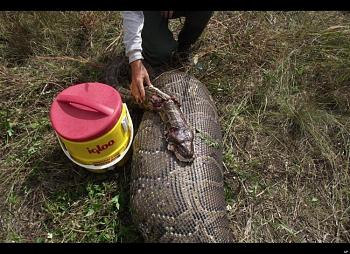 One HECK of a SNAKE !!!-04.jpg