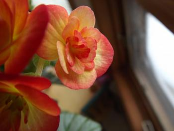 random pictures from your camera-macro-pictures-006.jpg