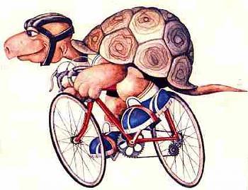 Funny stupid picture thread-turtle.jpg