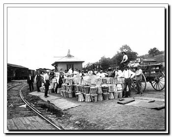 odd shots-loading-peaches-romney-wv-sept.-1908.jpg