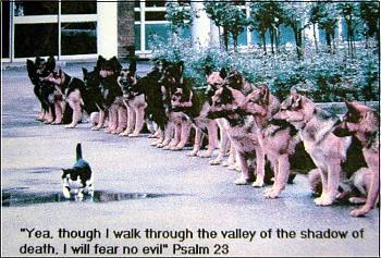 Funny stupid picture thread-german-shephards-kitten.jpg