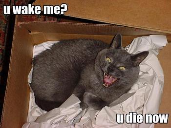 Funny stupid picture thread-u_wake_me_lolcat.jpg
