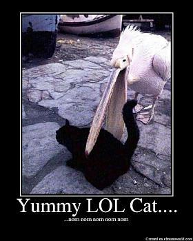 Funny stupid picture thread-yummylolcat.jpg