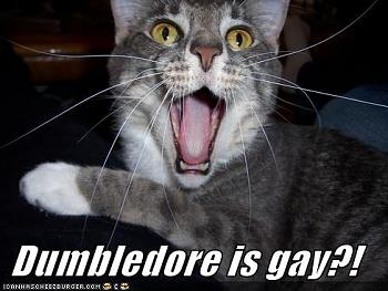 Funny stupid picture thread-dumbledore-gay-lolcat.jpg