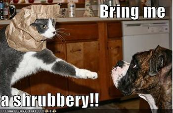 Funny stupid picture thread-funny-pictures-cat-dog-paper-bag-shrubbery-holy-grail.jpg
