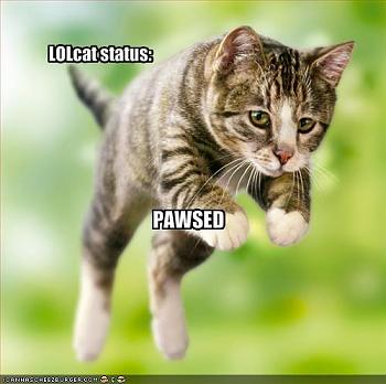Funny stupid picture thread-funny-pictures-lolcat-pause.jpg