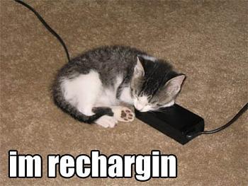 Funny stupid picture thread-funnyt-lolcat-recharging.jpg