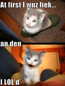 Funny stupid picture thread-ihasafunny-lol-cat-funny.jpg