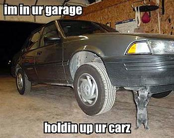 Funny stupid picture thread-lolcat-car.jpg