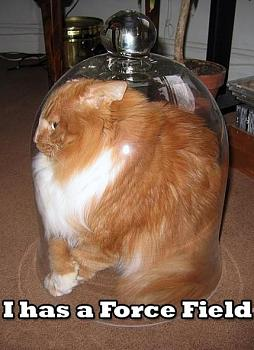 Funny stupid picture thread-lolcat-forcefield.jpg