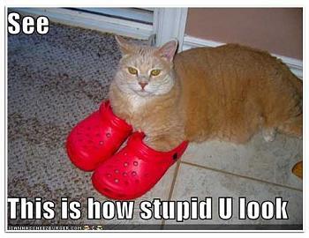 Funny stupid picture thread-lolcat_crocs.jpg