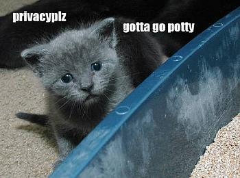 Funny stupid picture thread-lolcat22.jpg