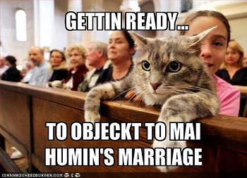 Funny stupid picture thread-lolcat-4.jpg