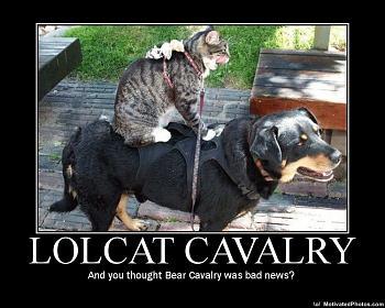 Funny stupid picture thread-lolcatcavalryandyouthoughtbearcavalrywasbadnews.jpg