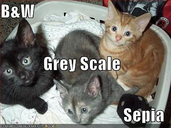 Funny stupid picture thread-lolcat-colors.jpg
