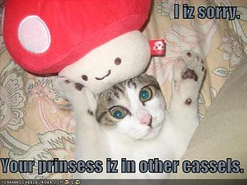 Funny stupid picture thread-lolcat-funny-picture-mario-cat.jpg