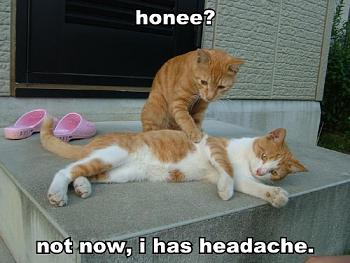 Funny stupid picture thread-lolcat-honee-not-now-i-has-headache.jpg