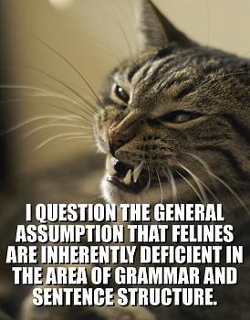 Funny stupid picture thread-lolcat-i-question-general-assumption-feli1.jpg