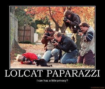 Funny stupid picture thread-lolcat-paparazzi.jpg