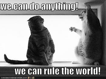 Funny stupid picture thread-lolcat-rule-world.jpg