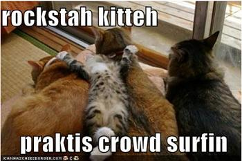 Funny stupid picture thread-lolcats.jpg