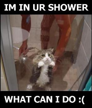 Funny stupid picture thread-lolcats233.jpg