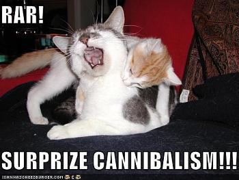 Funny stupid picture thread-lolcats-funny-pictures-surprise-cannibalism.jpg