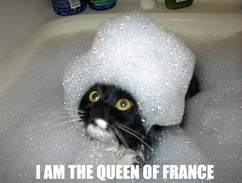 Funny stupid picture thread-queenoffrance.jpg