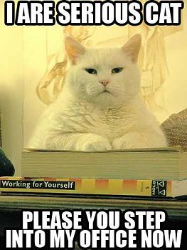 Funny stupid picture thread-serious-cat.jpg