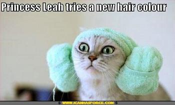Funny stupid picture thread-star-wars-lolcat-princess-leia.jpg