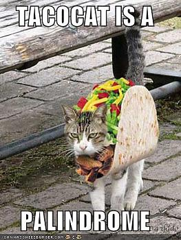 Funny stupid picture thread-taco-cat.jpg