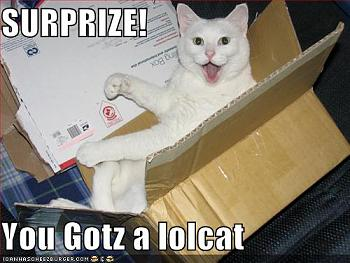 Funny stupid picture thread-your-box-contains-lolcat.jpg