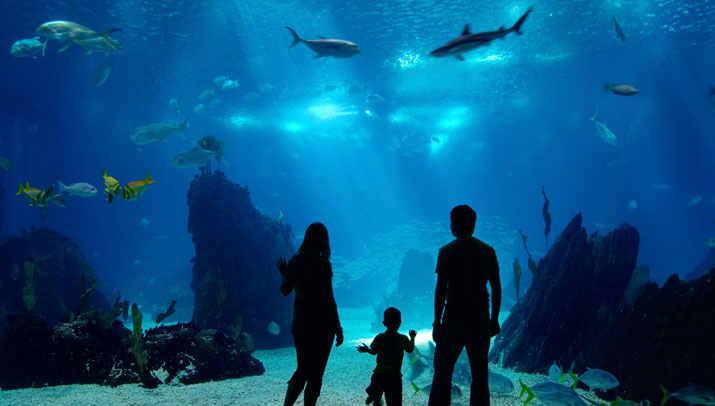 Newport Aquarium - Cincinnati, Ohio