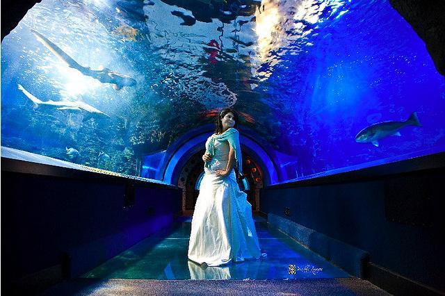 Cincinnati Ohio Newport Aquarium Photo Picture Image