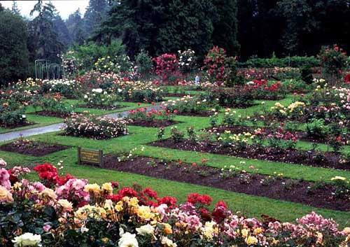 7 kota tersehat di dunia springocean83 for Portland international rose test garden