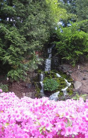 Portland oregon crystal springs rhododendron garden photo picture image for Crystal springs rhododendron garden