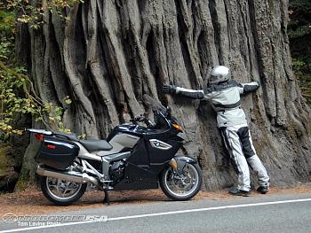 Quartzville gold-oregon-tree-hugger.jpg