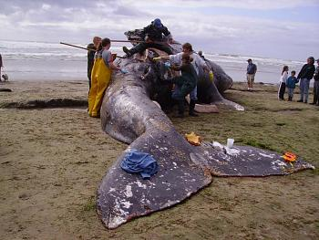 The wet side-whale2007.jpg