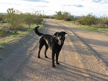 Dogs-walk-drvway-067.jpg