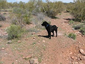 My dog gets neutered today.-camping-april-fools-day-015.jpg