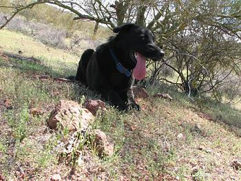 My dog gets neutered today.-camping-april-fools-day-104.jpg