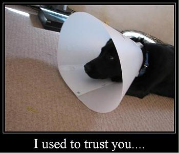 My dog gets neutered today.-i-used-trust-you....jpg