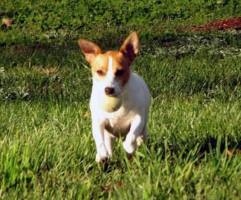 Dogs-img_1234%3D20.jpg