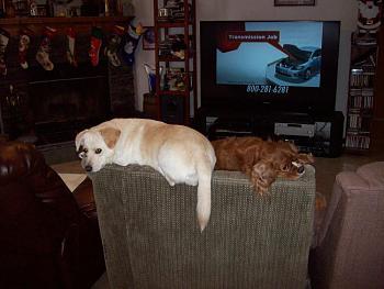 Dogs-100_0040.jpg
