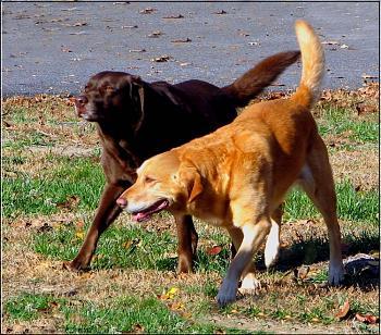 Dogs-img_8399-copy.jpg