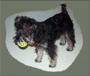 Dogs-suzy-q-tennis-ball.jpg